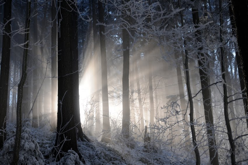 snowyforest,jpg
